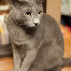 猫カフェ きゃりこ 新宿店 に行って、写真撮って来ました! かわいかった!