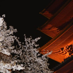 D600で桜撮影