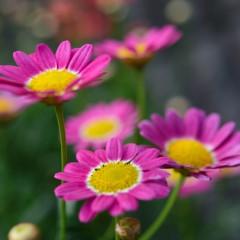 マクロレンズで花を撮ったよ