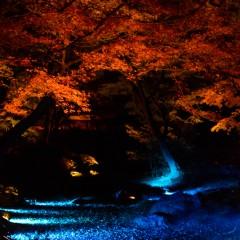 六義園の紅葉ライトアップ撮ってきた〜今年のライトアップは12/8(日)まで